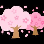 満開の2本の桜の木のイラスト