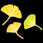 3枚のイチョウの葉のイラスト