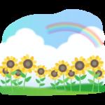 ひまわり畑と入道雲と虹のイラスト