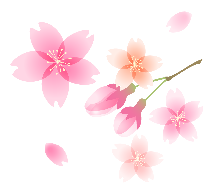 ふんわりとした桜の花と蕾のイラスト