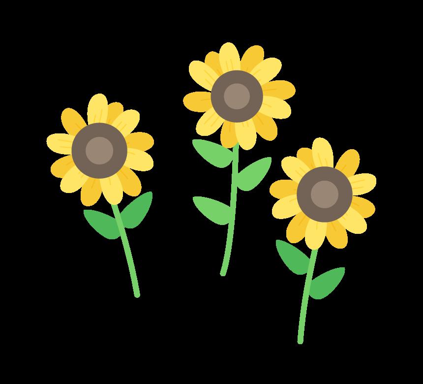 3輪のひまわりの花のイラスト