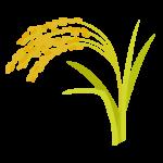 黄金色に色づいた稲穂のイラスト