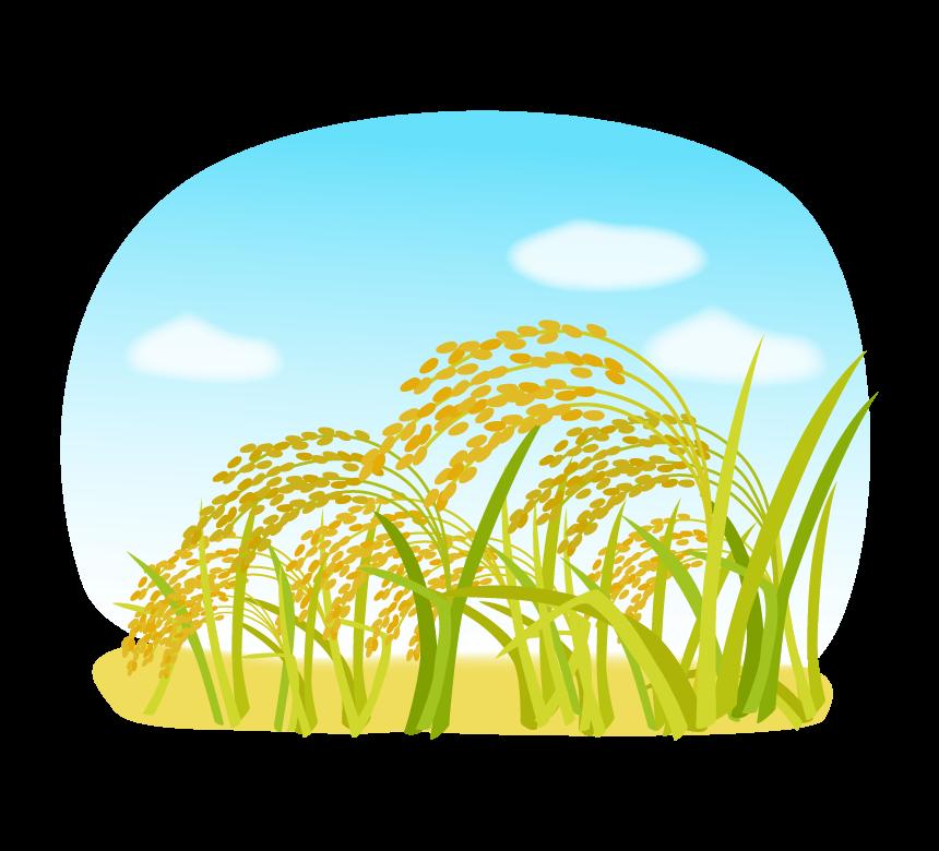 秋空と稲穂のイラスト