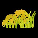 黄金色に実った稲穂のイラスト