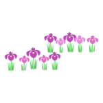 こどもの日 並んだ菖蒲の花のイラスト