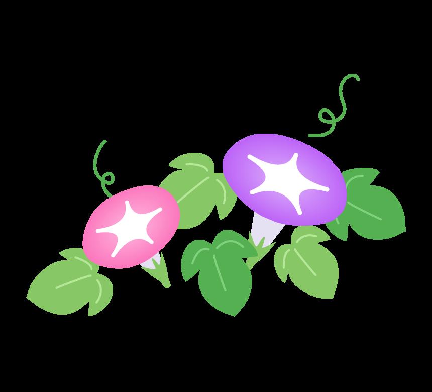 紫色とピンク色の朝顔の花のイラスト