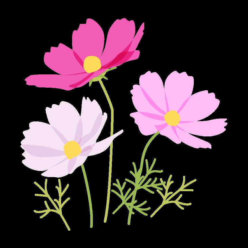 3色のコスモス(秋桜)のイラスト