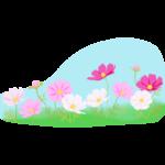 コスモス(秋桜)畑と青空のイラスト