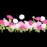 満開のコスモス(秋桜)畑のイラスト