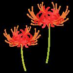 2輪のヒガンバナ(彼岸花)のイラスト