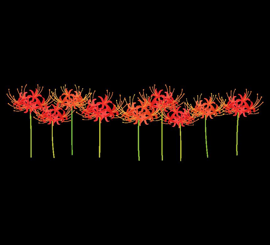 並んで咲くヒガンバナ(彼岸花)のイラスト