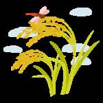 稲穂にとまる赤トンボのイラスト